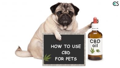 Photo of CBD pets. Что за зверь?